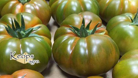 tomate ecológico tipo raf de almería